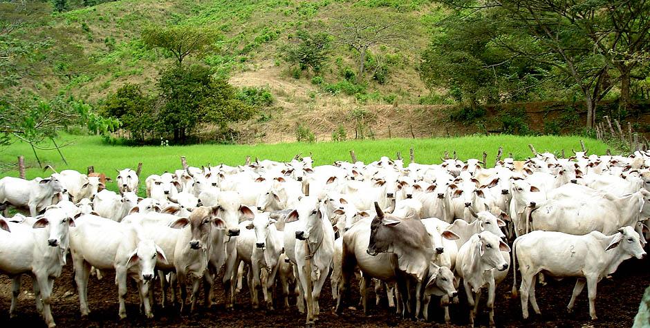 Taller sobre producción de carne y leche se desarrollará en la UNET